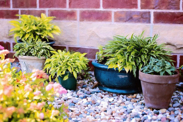 small pots for container garden with limited space
