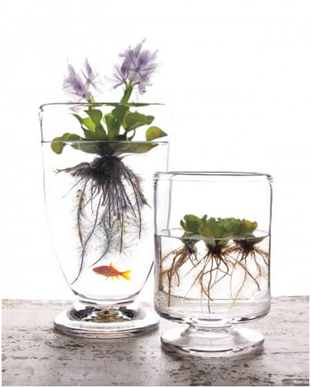 Clear-Container-Water-Garden