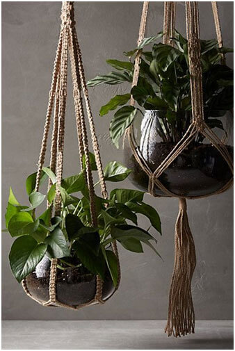 Not-Enough-Space-Hang-Your-Plants