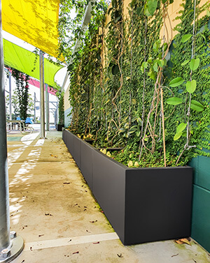 IOTA Moscow Planters with Climbing Shrubs at St. Patrick's College